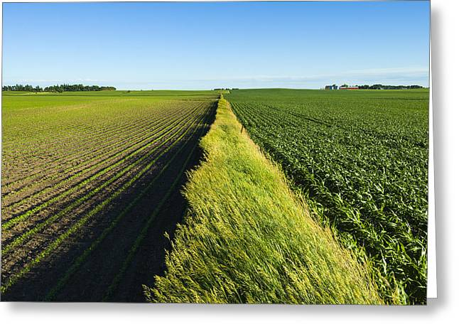 Fence Row Greeting Cards - A Newly Planted Soybean Field Greeting Card by Scott Sinklier