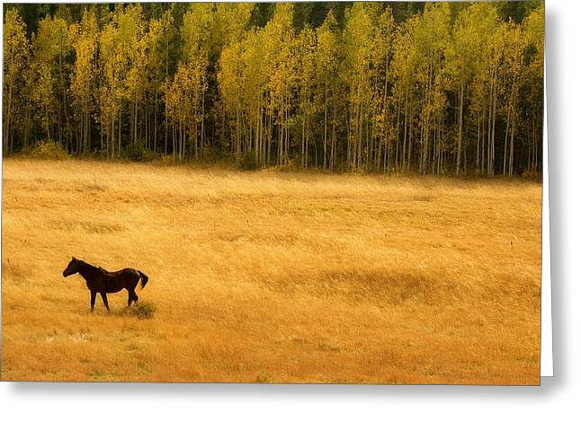 Striking Images Greeting Cards - A Nice Autumn day Greeting Card by James BO  Insogna