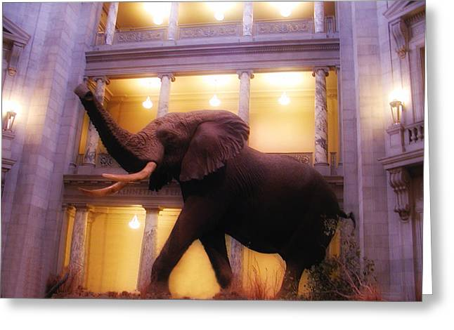 Smithsonian Greeting Cards - A Night at the Museum Greeting Card by Bill Cannon