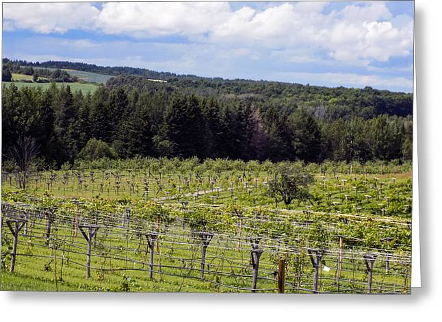 Maine Farms Greeting Cards - A Northern Maine Vineyard Greeting Card by William Tasker
