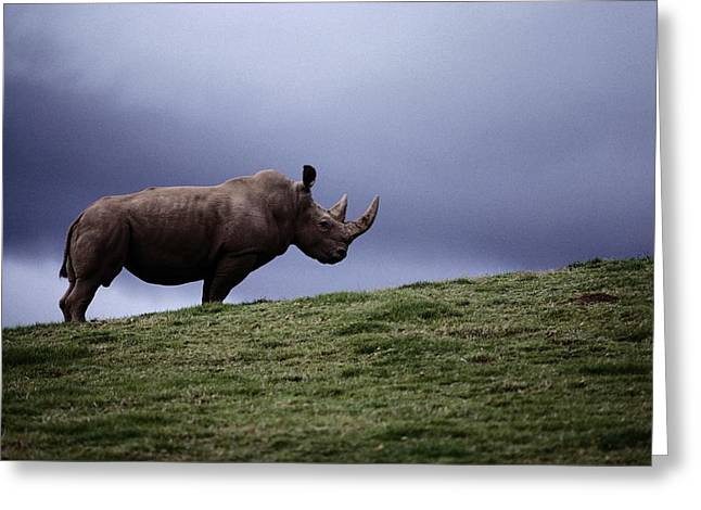 A Northern White Rhinoceros At The San Greeting Card by Michael Nichols