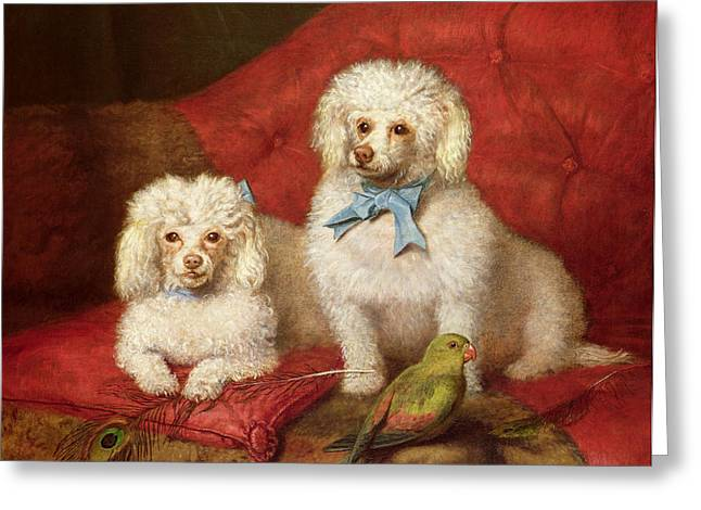 Couch Greeting Cards - A Pair of Poodles Greeting Card by English School