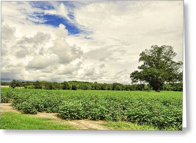 Georgia Cotton Fields Greeting Cards - A Patch Of Blue Greeting Card by Jan Amiss Photography