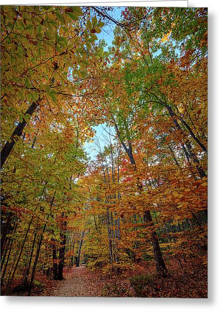 A Path Diverged In The Woods Greeting Card by Rick Berk