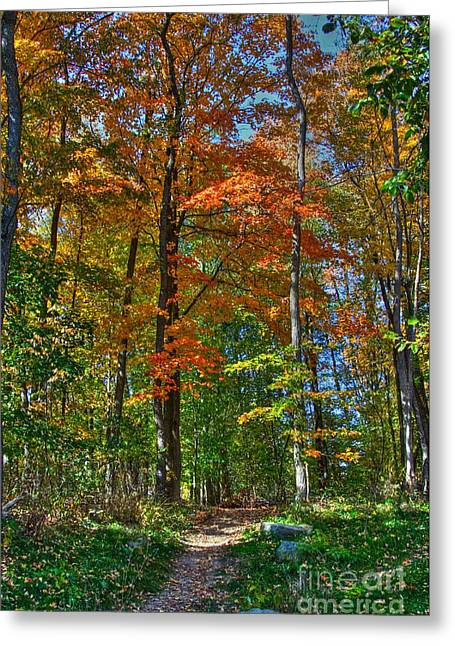 Signora Greeting Cards - A path of color Greeting Card by Robert Pearson