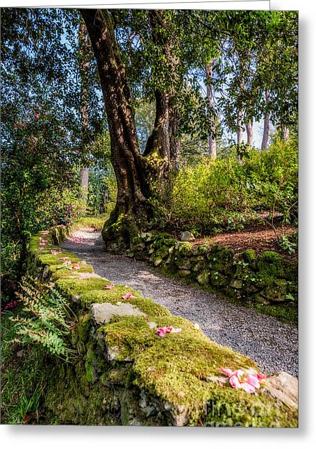 Moss Greeting Cards - A Pathway Greeting Card by Adrian Evans
