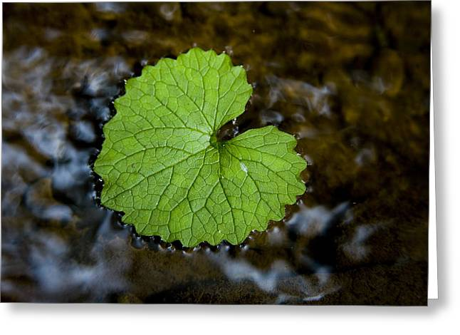 Patterns In Nature Greeting Cards - A Patterned Leaf Floats On The Summer Greeting Card by Stephen St. John