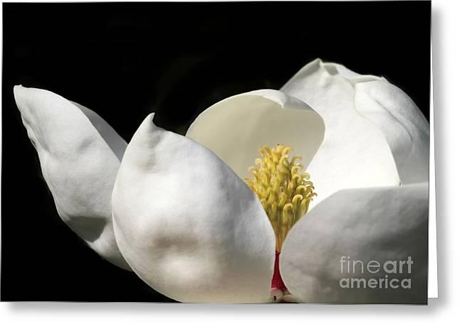 A Peek Inside A Magnolia Greeting Card by Sabrina L Ryan