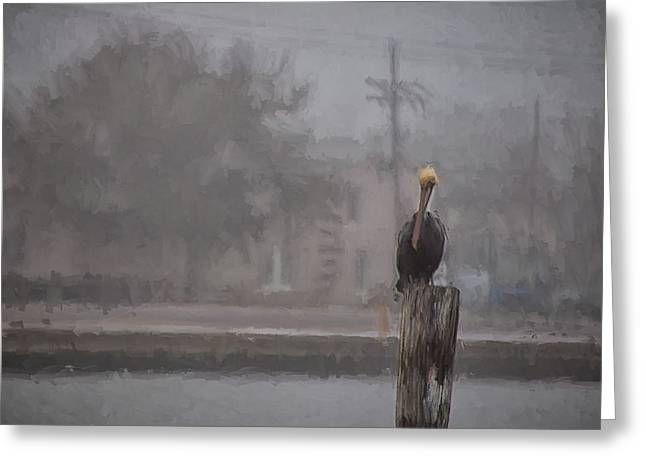 A Pelican In The Fog Greeting Card by Shane Adams
