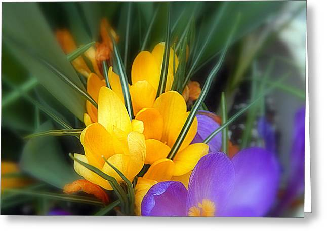 Annapolis Valley Greeting Cards - A perennial favorite Greeting Card by Karen Cook