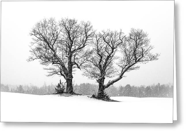 New England Winter Greeting Cards - A Perfect Pair Greeting Card by Shared Perspectives  Photography