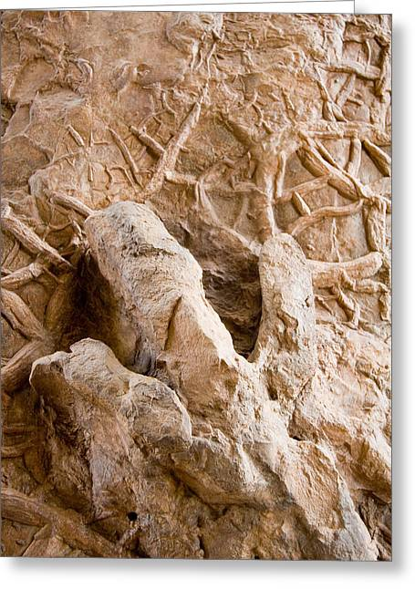 A Petrified Dinosaur Footprint Shown Greeting Card by Taylor S. Kennedy