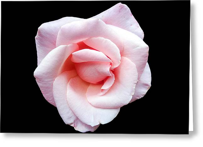 Rose Petals Greeting Cards - A Pink Rose Greeting Card by Martin Wall