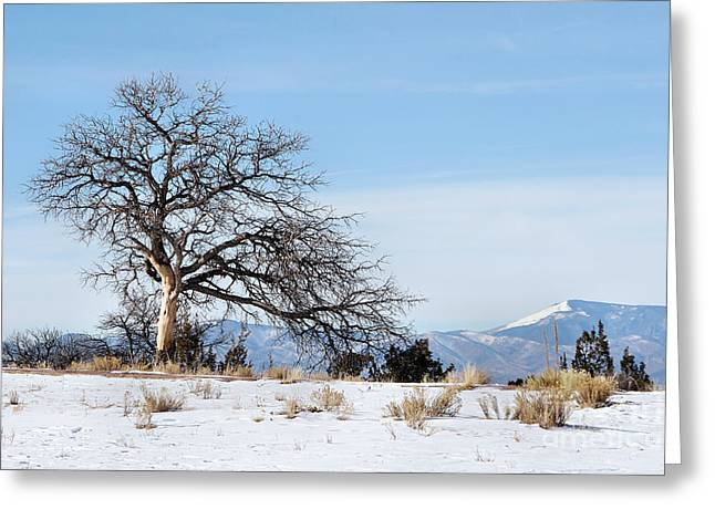 Snow Scene Landscape Greeting Cards - A Placid Winter Scene Greeting Card by Gabriele Pomykaj