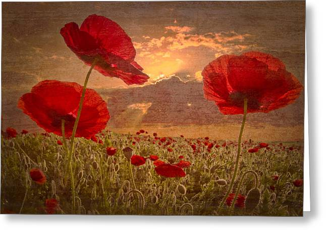 Foggy Landscapes Greeting Cards - A Poppy Kind of Morning Greeting Card by Debra and Dave Vanderlaan