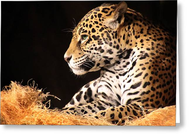 Jaguars Greeting Cards - A Portrait Greeting Card by Debbie Nobile