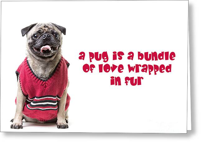 Animals Love Greeting Cards - A pug is a bundle of love wrapped in fur Greeting Card by Edward Fielding
