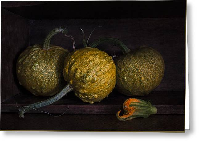 istic Photographs Greeting Cards - A Pumpkin Flower Greeting Card by Constance Fein Harding