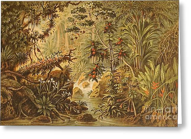 A Quaint Detailing Of The Most Beautiful Tropical Country Venezuela Greeting Card by MotionAge Designs