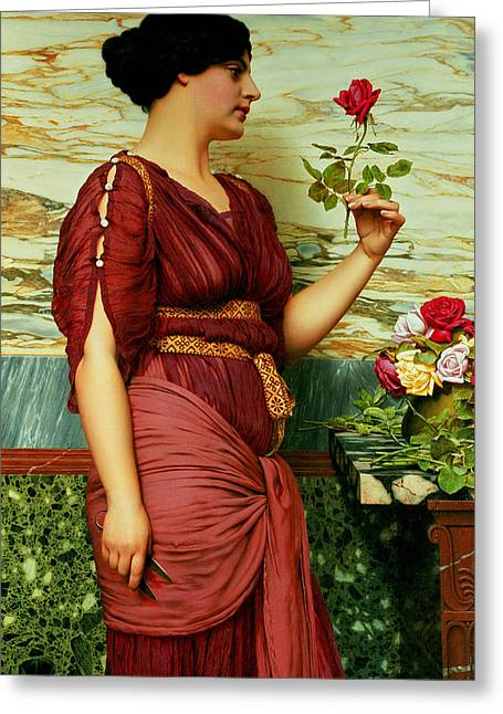 Lost In Thought Paintings Greeting Cards - A Red Rose   Greeting Card by John William Godward