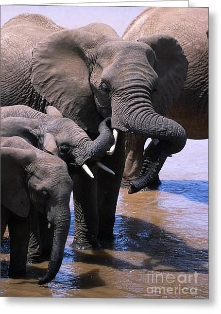 International Travel Greeting Cards - A Refreshing Moment Greeting Card by Sandra Bronstein