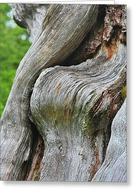 Olympic National Park Greeting Cards - A Remarkable Tree - Duncan Western Red Cedar Olympic National Park WA Greeting Card by Christine Till