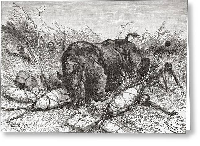 Rhinoceros Drawings Greeting Cards - A Rhinoceros Attacks An Expedition In Greeting Card by Ken Welsh