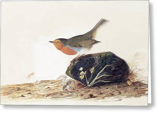 Balance Paintings Greeting Cards - A Robin Perched on a Mossy Stone Greeting Card by John James Audubon