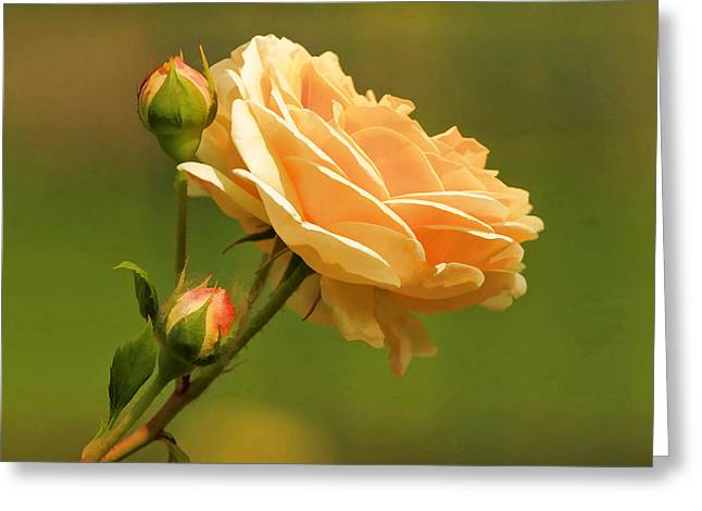 Paint Photograph Greeting Cards - A rose by any other name Greeting Card by Geraldine Scull