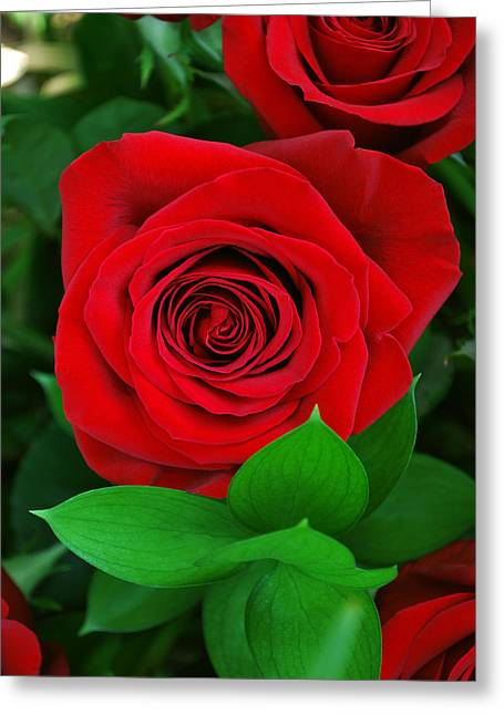Mother Gift Greeting Cards - A Rose for Mom Greeting Card by Adele Moscaritolo
