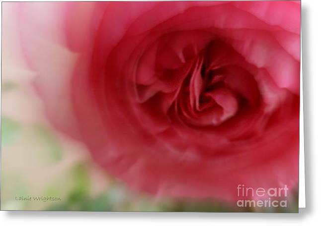 A Rose Is A Rose Greeting Card by Lainie Wrightson