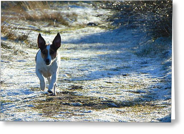 Jogging Greeting Cards - A Running Dog Greeting Card by Jon Rushton