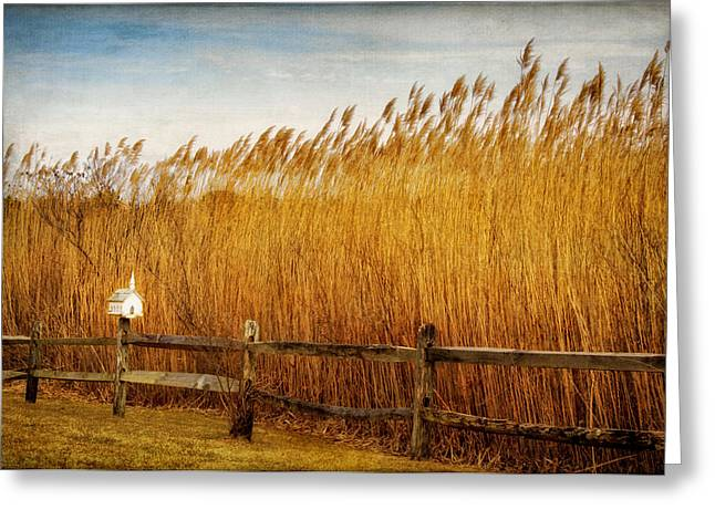 Observer Greeting Cards - A Sanctuary for Birds Greeting Card by Carolyn Derstine