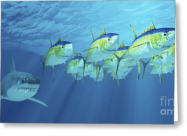 Fish Digital Art Greeting Cards - A School Of Yellowfin Tuna Is Followed Greeting Card by Corey Ford