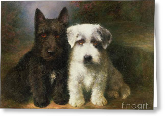 White Dogs Greeting Cards - A Scottish and a Sealyham Terrier Greeting Card by Lilian Cheviot