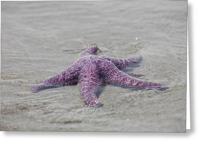 Surf Silhouette Greeting Cards - A Sea Star Lies In The Surf In The Gulf Greeting Card by Taylor S. Kennedy
