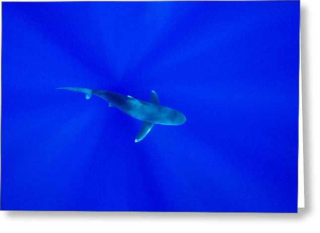 Snorkel Greeting Cards - A Shark Below With Sun Rays From Above Greeting Card by Brent Barnes