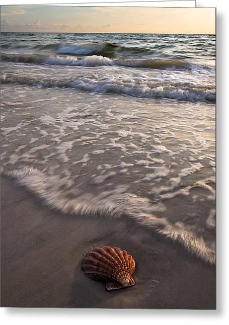 Beach Photography Greeting Cards - A Shells Life Greeting Card by Clay Townsend