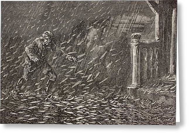 Unnatural Greeting Cards - A Shower Of Fish In Transylvania Greeting Card by Ken Welsh