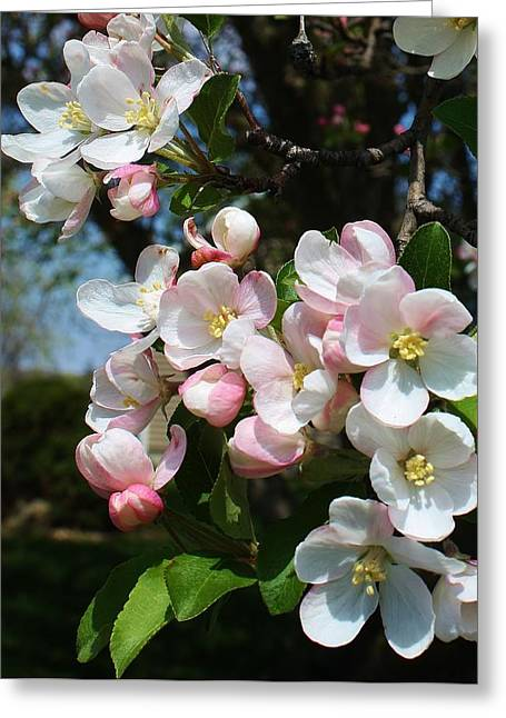 Galt Greeting Cards - A Sign of Spring Greeting Card by Bruce Bley