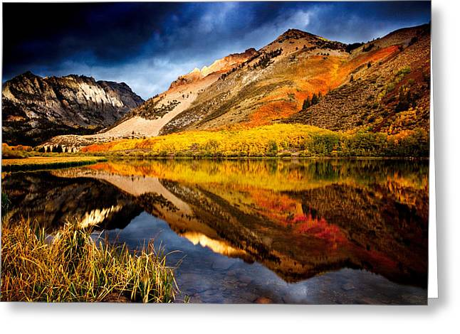 Fall Trees Greeting Cards - A Silent Blaze Greeting Card by Dan Holmes