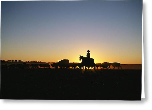 National Peoples Greeting Cards - A Silhouetted Australian Cattle Rancher Greeting Card by Medford Taylor