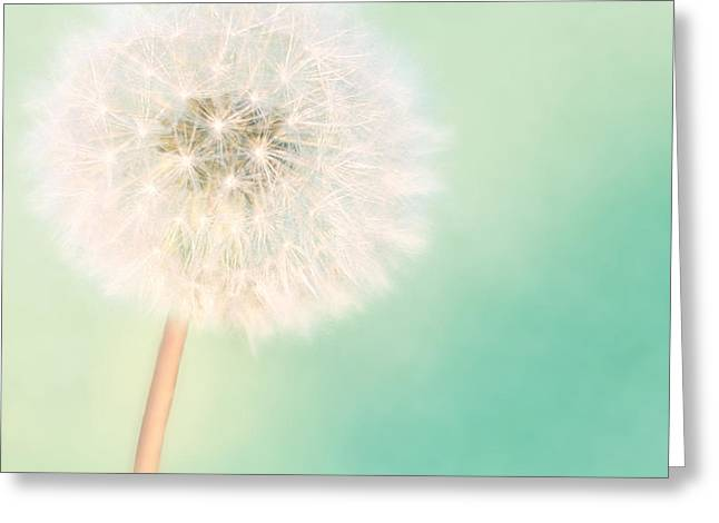 Cushion Photographs Greeting Cards - A Single Wish II Greeting Card by Amy Tyler