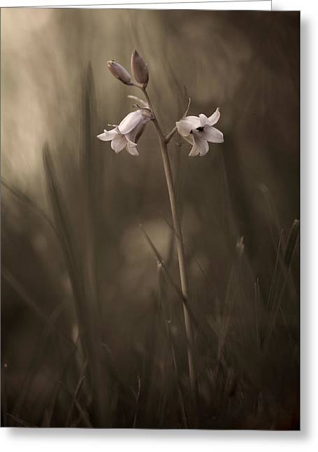 Macro Greeting Cards - A Small Flower On The Ground Greeting Card by Allan Wallberg