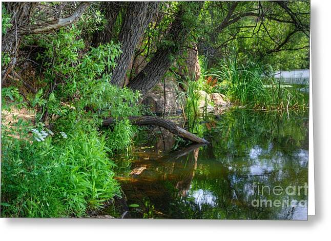 Prescott Greeting Cards - A Small Spice of Beauty Greeting Card by Thomas  Todd