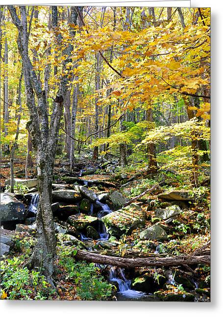 A Smokey Mountain Stream  Greeting Card by Brittany H