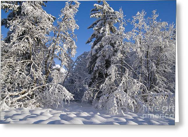 Life Line Greeting Cards - A Snowy Forest Greeting Card by John Hyde - Printscapes