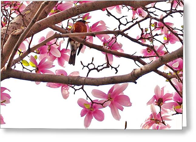 A Songbird In The Magnolia Tree - Square Greeting Card by Rona Black