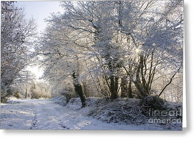 A sparkling Winter Day Greeting Card by Sophie De Roumanie