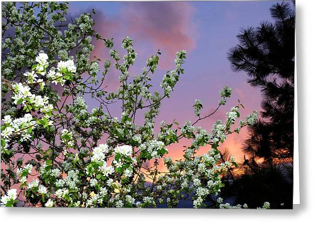 A Splendid Time Of Day Greeting Card by Will Borden